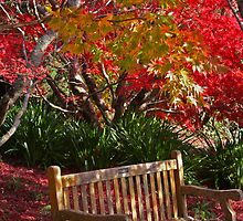 Red Autumn Relaxing by Kellea Croft