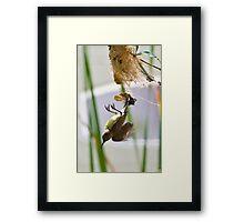 Little Spiderhunter 2 Framed Print