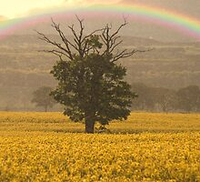 Somewhere Over the Rainbow by Fraser Ross