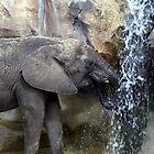 Elephant Drink by Charles Whitaker