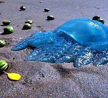 Blubber of the Sea by Garry Schlatter