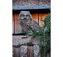 Baby Owl Photographic Print
