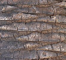 bark by Deborah Hilton