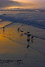 Dawn at Torrie Pines with Shore Birds by photosbyflood