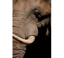 Elephant Close-up Photographic Print