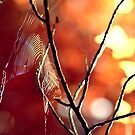 Beneath the Autumn Trees by James McKenzie