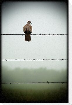 Do you mind? I am trying to sit on this barbed wire fence and contemplate the meaning of life and you're disturbing me... by Jenny Ryan