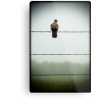 Do you mind? I am trying to sit on this barbed wire fence and contemplate the meaning of life and you're disturbing me... Metal Print