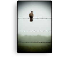Do you mind? I am trying to sit on this barbed wire fence and contemplate the meaning of life and you're disturbing me... Canvas Print