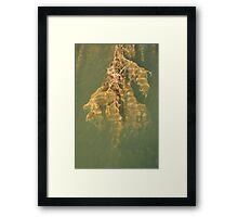 Beneath the surface IV Framed Print