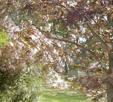 reflected light from leaves by Paul Kavsak