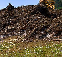 Debris by Walter Quirtmair