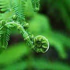 Where the green ferns grow by rhobint