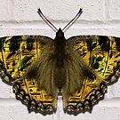Monarchus Heiroglyphicus by synister1
