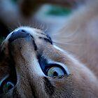 Celebration of Life Through the Eyes of Animals by Kimberley Mazzoni