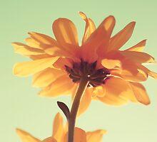 petali _ vintage - retro by Aimelle