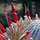 flower  by ben reid