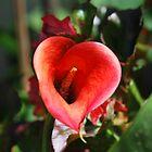 flower by TaylorV