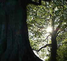 Natures Wonder by Katie  Jackman