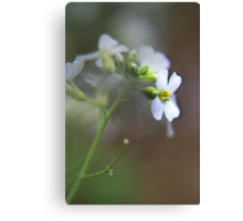 White wild flower Canvas Print