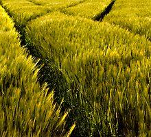 Green Crop by Geoff Carpenter