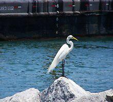 White Crane - Jetty Dweller by Clif Desmond