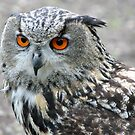 Eagle Owl by Stefanie Köppler
