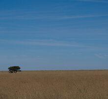 Free State Zen by Martie Venter