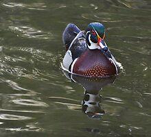 Wood Duck Reflections by Nancy Barrett