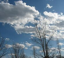 Cumulus by Metalrocker2020