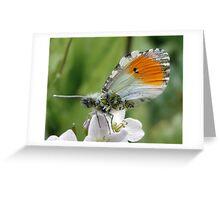 Imago Imperfecta Greeting Card