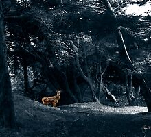 Fawn in a Blue Wood by Wayne King