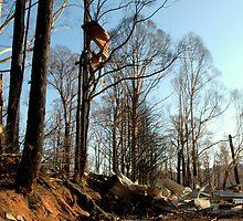 Bushfire Aftermath Marysville Australia by Tom Newman