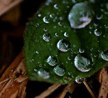 Rain by Lita Medinger