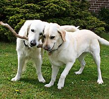 Ditte and Tulle are sharing a stick by Trine