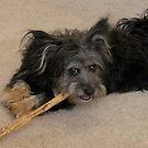 Buddy at Play 2 by Bonnie Pelton