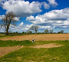 Charlie in the Field by Michael Denholm