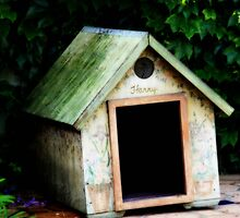 In The Dog House by Megan Martin