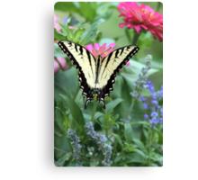 Tiger Swallowtail II Canvas Print