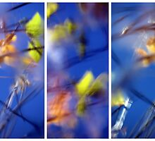 Beyond Blue - Triptych by Kitsmumma