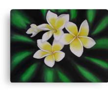 Yellow Frangipanis Canvas Print