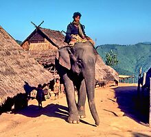 Village elephant by John Spies