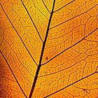golden leaf by frank Yule