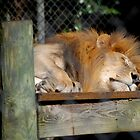 The King of the Zoo by Barry Goble