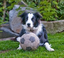 He is just fine now.. so Play with Me! by j Kirk Photography                      Kirk Friederich