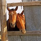 A window into the world of horses. by Gary  Oertel