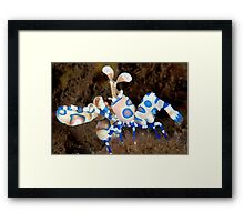 Harlequin March Framed Print