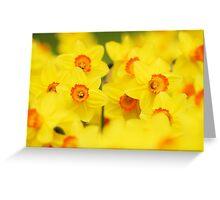 Happy yellow daffodils Greeting Card