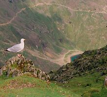 Birds eye view from Mt. Snowdon by Kymbo