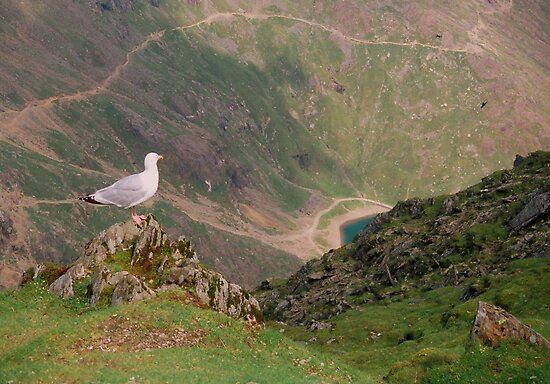 Birds eye view from Mt. Snowdon by Kymbo